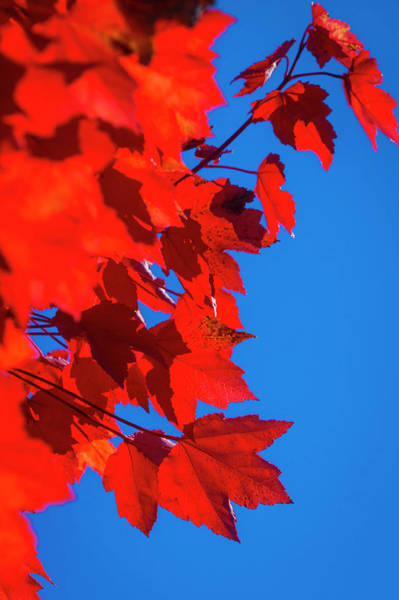 Wall Art - Photograph - Red Autumn by Garry Gay