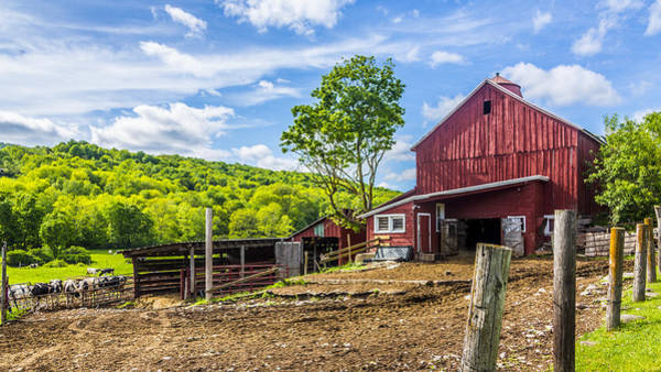 Wall Art - Photograph - Red Barn And Cows by Paula Porterfield-Izzo
