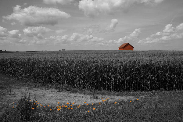 Photograph - Red Barn And Lilies by Dylan Punke