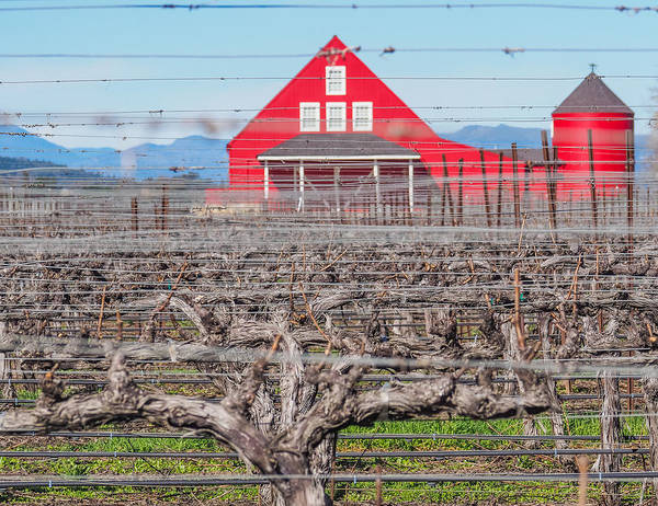 Photograph - Red Barn In Napa Valley by Robin Zygelman