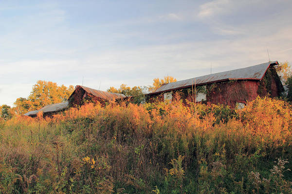 Photograph - Red Barn In The Country by Angela Murdock