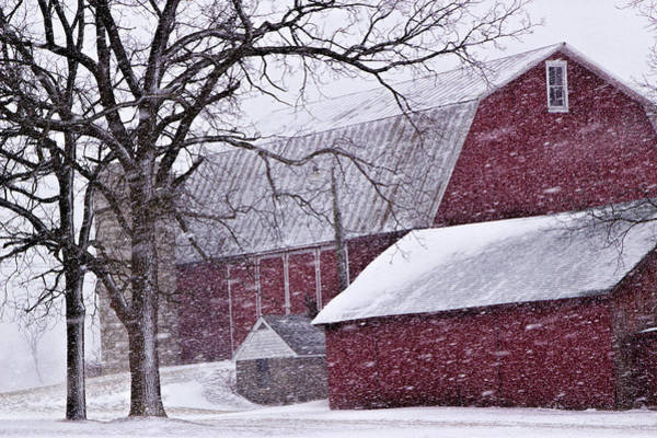 Photograph - Red Barns During A Snowstorm by Randall Nyhof