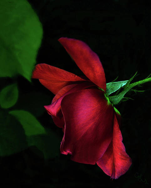 Wall Art - Photograph - Red Beauty by Camille Lopez