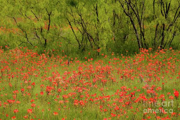 Wall Art - Photograph - Red Beauty by Iris Greenwell