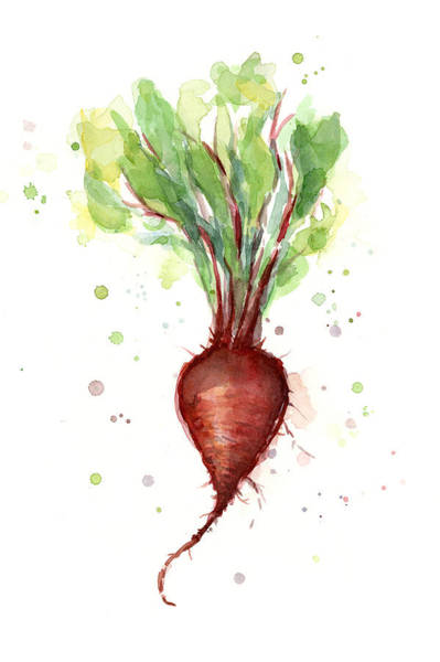 Beet Wall Art - Painting - Red Beet Watercolor by Olga Shvartsur