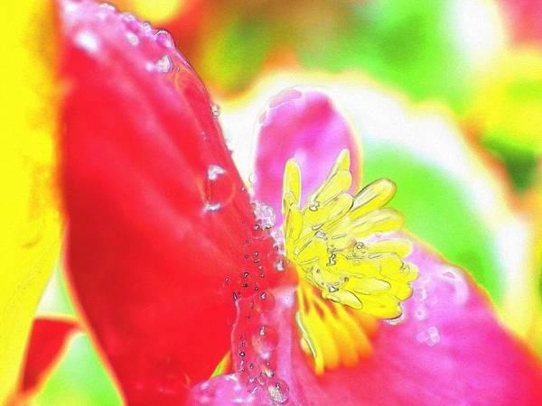 Flower Digital Art - Red Begonia by Kumiko Izumi