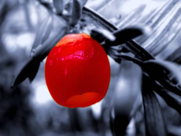 Photograph - Red Bell by Roberto Alamino