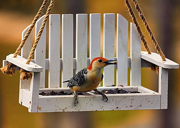 Red Bellied Woodpecker Photograph - Red Bellied On Swing - 5 by Bill Tiepelman