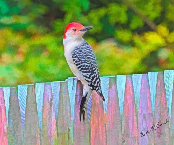 Digital Art - Red Bellied Woodpecker Perching On A Fence. by Rusty R Smith