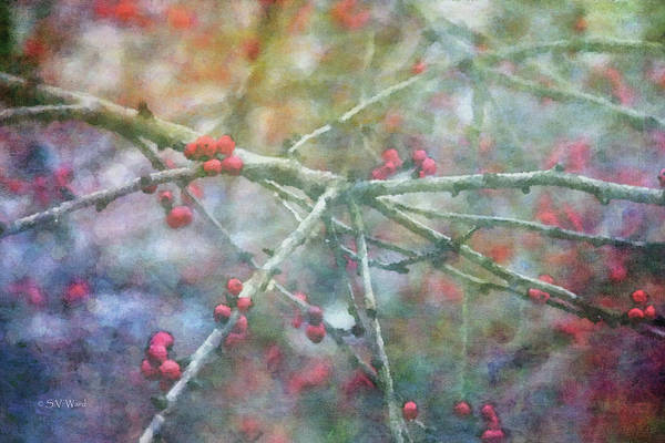 Photograph - Red Berries 7952 Idp_2 by Steven Ward