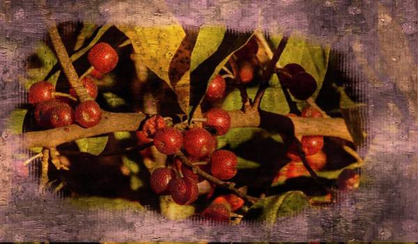 Photograph - Red Berries by Rusty R Smith