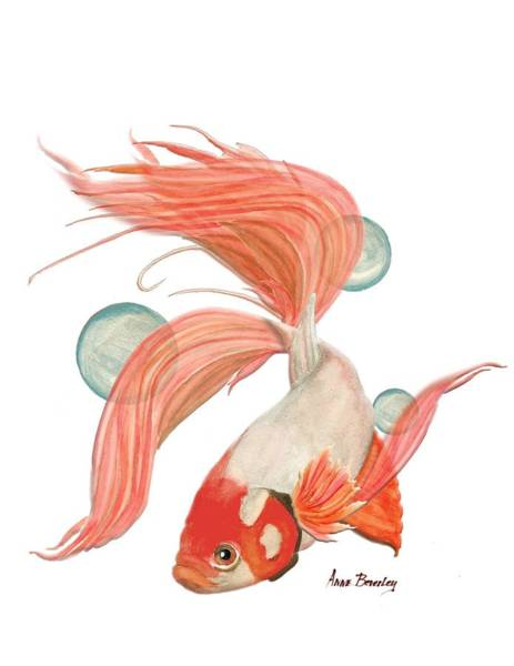 Painting - Red Beta Fish by Anne Beverley-Stamps