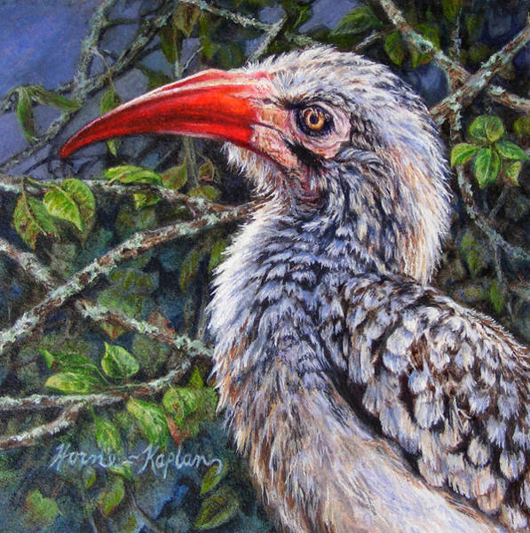 Red Billed Hornbill Art Print