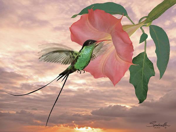 Red-billed Streamertail Hummingbird Art Print