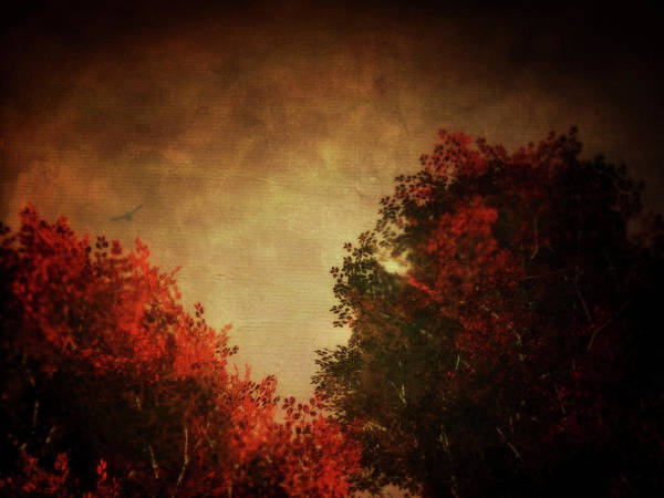 Painting - Red Birch With Textured Sky by Jan Keteleer