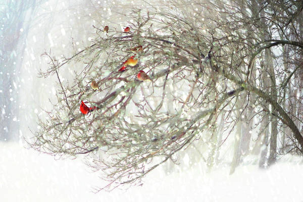 Digital Art - Red Bird Convention by Sue Collura