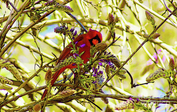 Digital Art - Red Bird Eating Wisteria 1 by Kim Pate