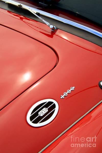 Photograph - Red Bonnett by Stephen Mitchell