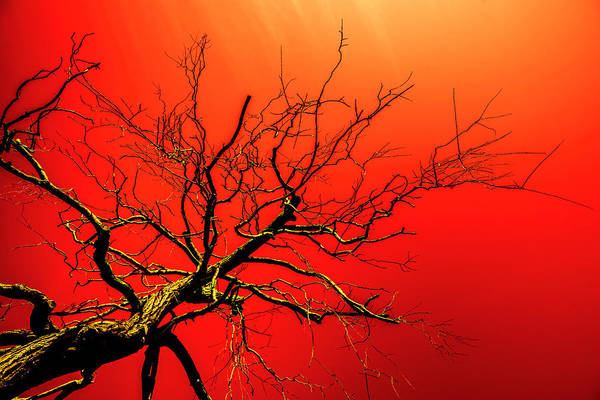 Photograph - Red Branches Of Crimson Dreams by John Williams