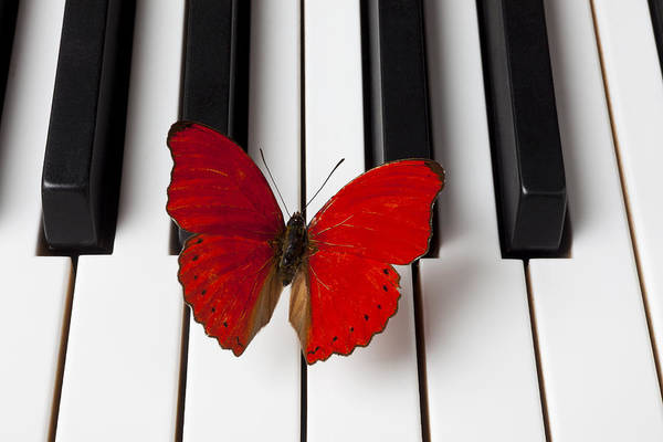 Piano Photograph - Red Butterfly On Piano Keys by Garry Gay