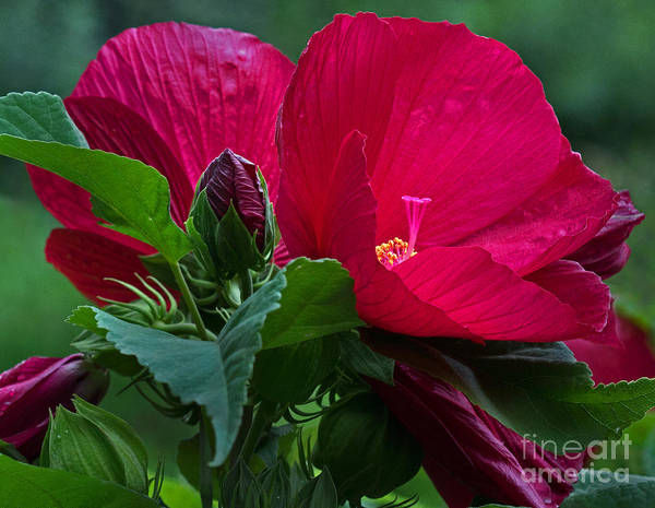Wall Art - Photograph - Red By The Pond by Robert Pilkington