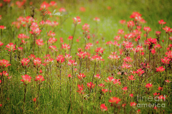 Wall Art - Photograph - Red Carpet by Iris Greenwell