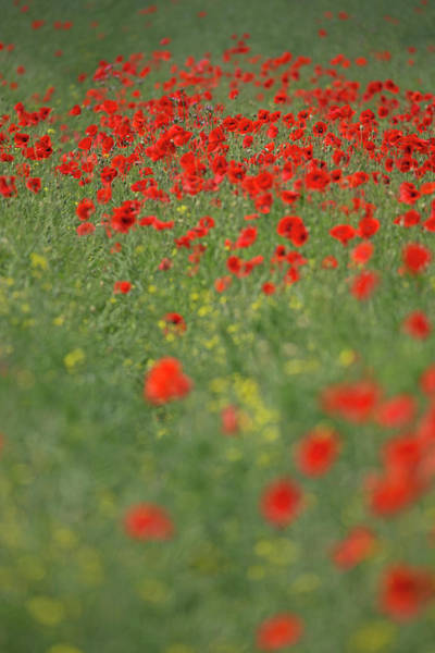 Photograph - Red Carpet by Peter Walkden
