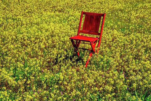 Wall Art - Photograph - Red Chair In Firld Of Yellow Flowers by Garry Gay