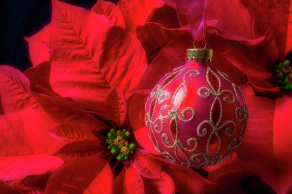 Foilage Photograph - Red Christmas Ball And Poinsettia by Garry Gay