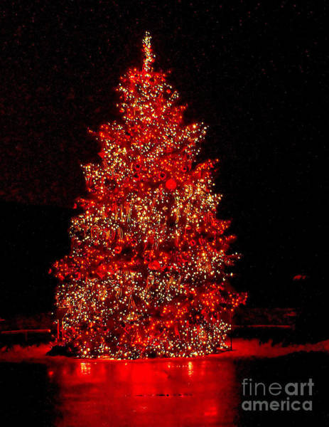 Photograph - Red Christmas Tree by Nick Zelinsky