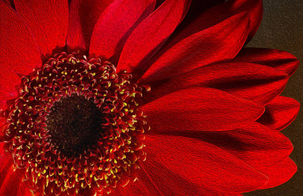 Photograph - Red Chrysanthemum Flower Bloom In Oil Painting Fusion by John Williams