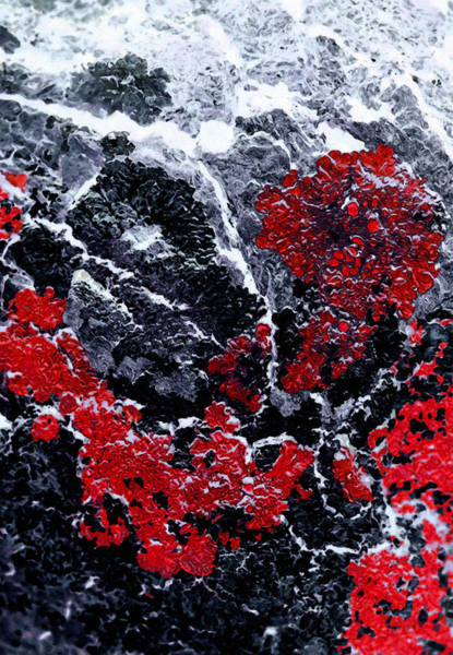Rock Texture Painting - Red Cliff by Edouard Coleman