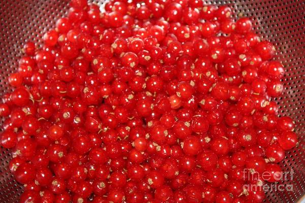 Wall Art - Photograph - Red Currant by Carol Groenen