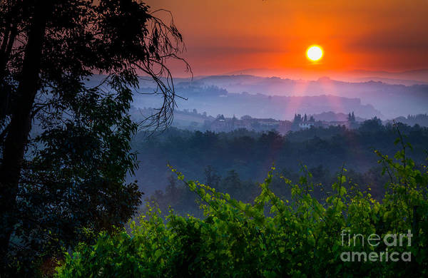Italian Wine Photograph - Red Dawn by Inge Johnsson