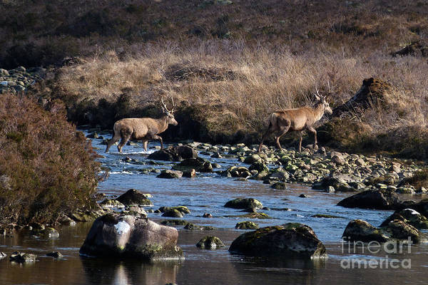 Photograph - Stags River Crossing by Phil Banks