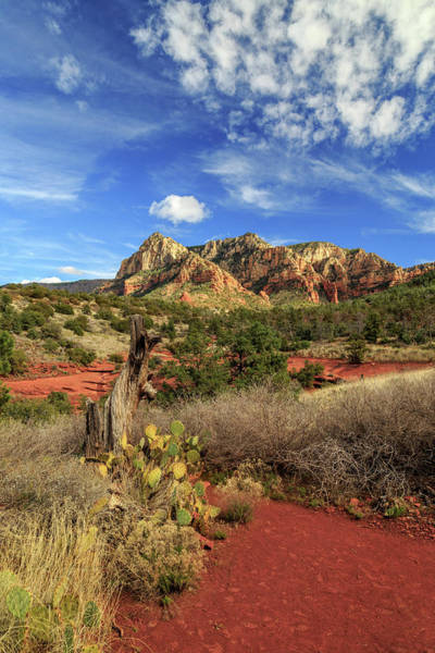 Photograph - Red Dirt And Cactus In Sedona by James Eddy