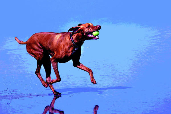 Red Dog Running Art Print