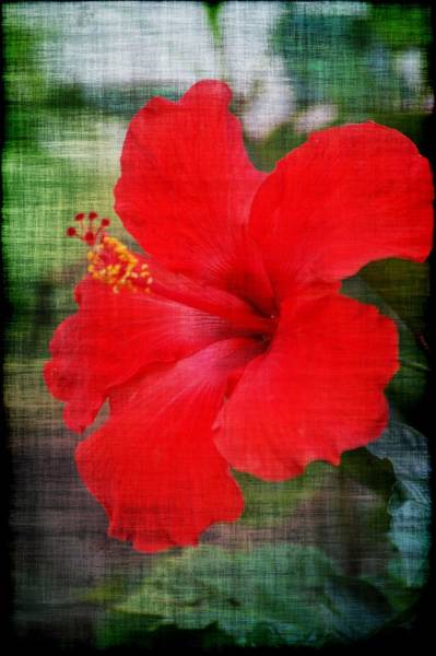 Photograph - Red by Donna Bentley