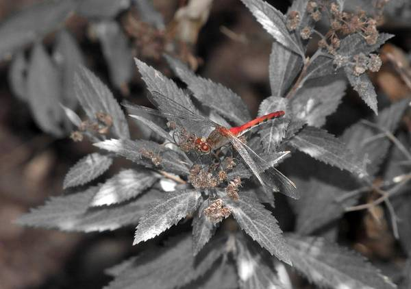 Photograph - Red Dragon by Scott Hovind