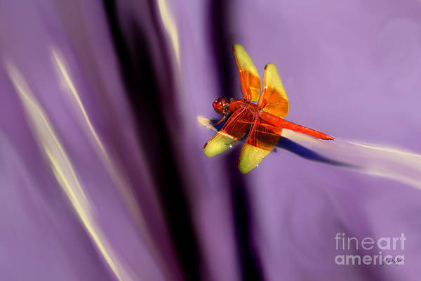 Mixed Media - Red Dragonfly On Purple Background by Lisa Redfern