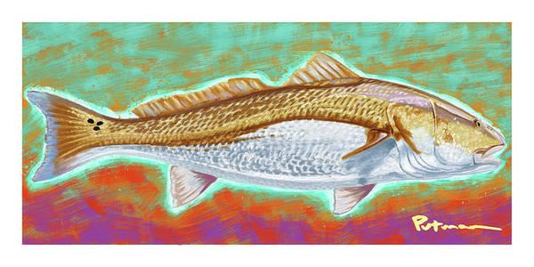Redfish Digital Art - Red Drum by Kevin Putman