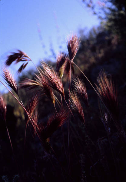 Photograph - Red Feathers by Randy Oberg