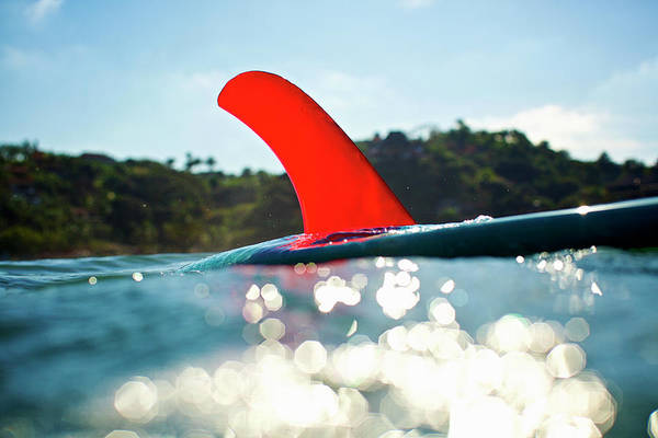Photograph - Red Fin by Nik West