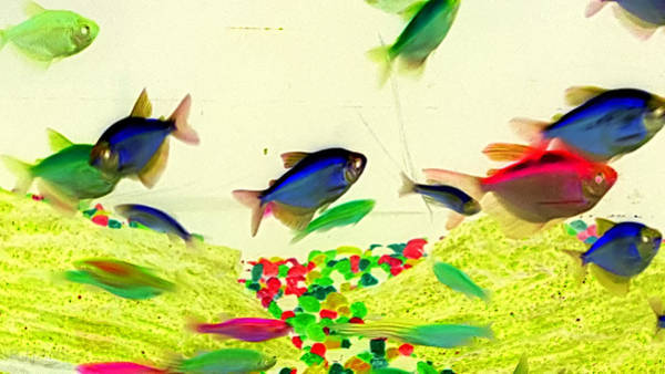 Photograph - Red Fish Blue Fish 123 by Rob Hans