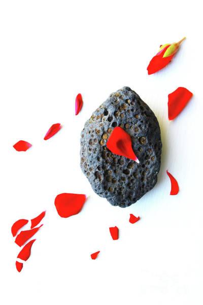 Wall Art - Photograph - Red Flower And A Rock 1 by Masako Metz