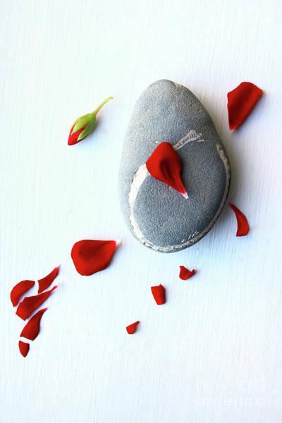 Wall Art - Photograph - Red Flower And A Rock 2 by Masako Metz