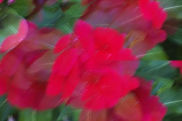 Photograph - Red Flower by Karen Harris