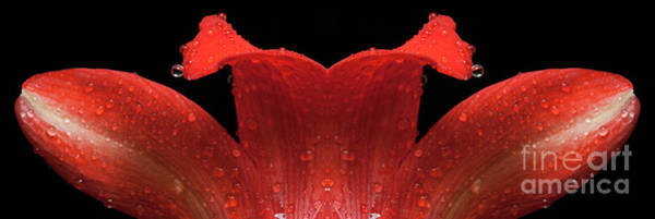 Wall Art - Photograph - Red Flower Mirrored - 0177-d by Paul W Faust - Impressions of Light