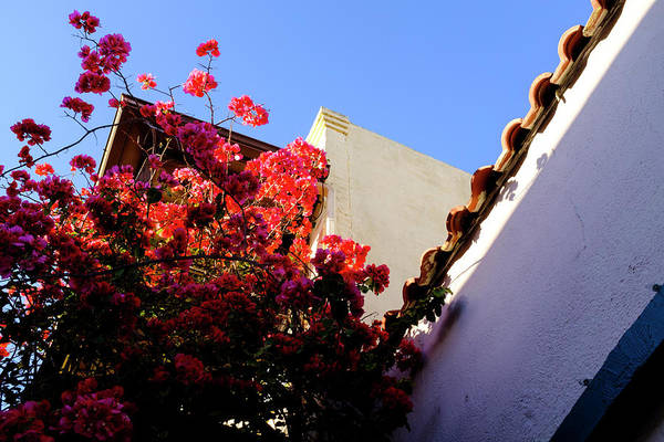 Red Flowers And Architecture In Saint Augustine Florida Art Print