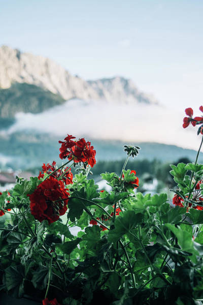 Wall Art - Photograph - Red Flowers And Mountains by Pati Photography